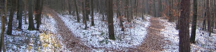 Kaksi metsäpolkua - mikä on oikea valinta?